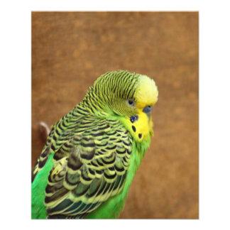 Budgie Bird 11.5 Cm X 14 Cm Flyer