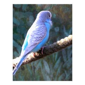 Budgie Bird 21.5 Cm X 28 Cm Flyer