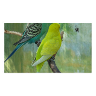 Budgie Business Cards