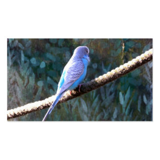 Budgie Business Card Template
