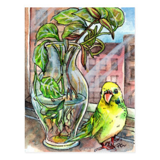 Budgie by the Window Postcard