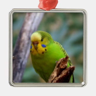 Budgie Christmas Ornament