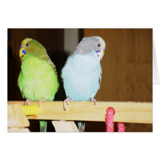 Budgie Large Note Card