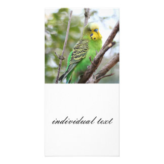 budgie photo cards