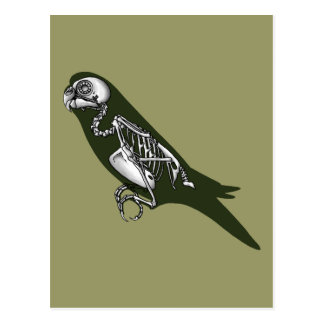 Budgie skeleton postcard