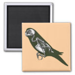 Budgie skeleton square magnet