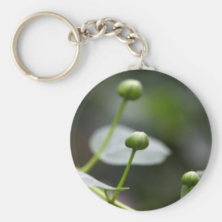 Buds of the caper bush, Capparis spinos. Basic Round Button Key Ring