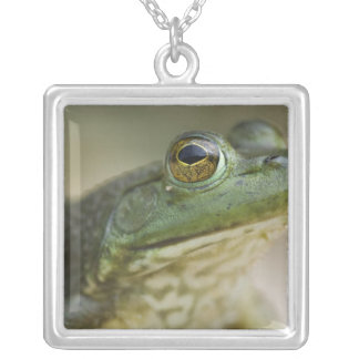 Bufallo National River, Northwest Arkansas Silver Plated Necklace