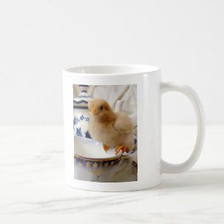 Buff Chick At Tea Mug