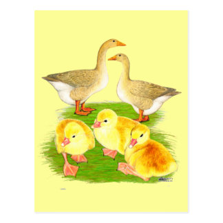 Buff Goose Family Postcard
