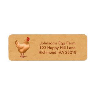 Buff Orpington Chicken Hen