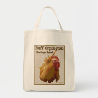 Buff Orpington Rooster image and text