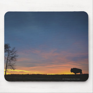 Buffalo At Sunset In Elk Island National Park Mouse Mat