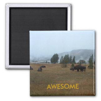 Buffalo Awesome Magnet