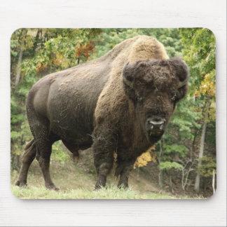 Buffalo Bull 1 Mouse Pad