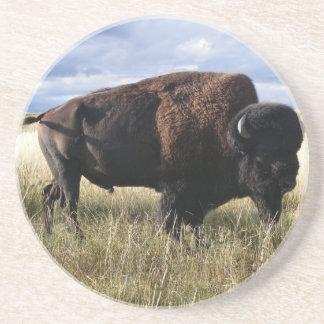 Buffalo Bull Coaster