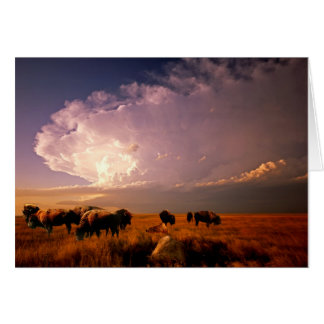 Buffalo herd card