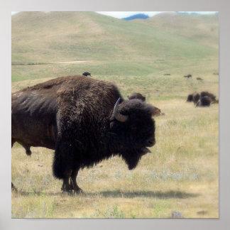 Buffalo Hunts Poster