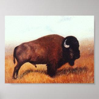 Buffalo III Poster