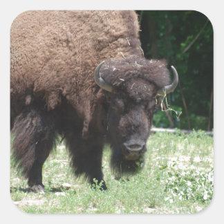 Buffalo in Field Square Sticker