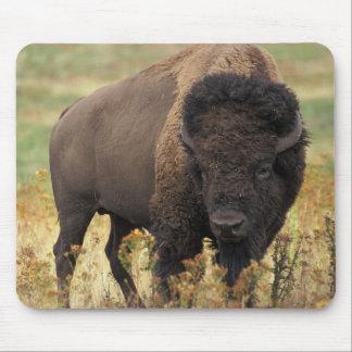 Buffalo Mouse Mat