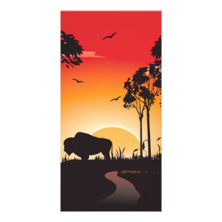 Buffalo Picture Card
