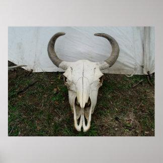 Buffalo Skull Posters