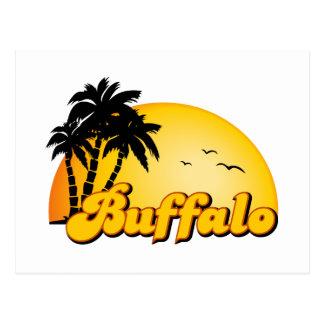 Buffalo Sun Postcard