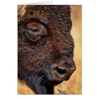 Buffalo Up Close Card