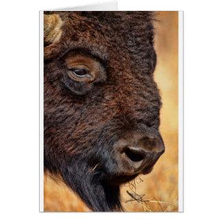 Buffalo Up Close Greeting Cards