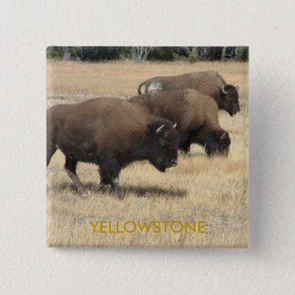 Buffalo Yellowstone Button