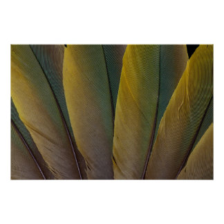 Buffon'S Macaw Feather Detail Poster