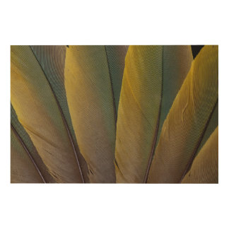 Buffon'S Macaw Feather Detail Wood Wall Art