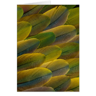 Buffon'S Macaw Feathers Card