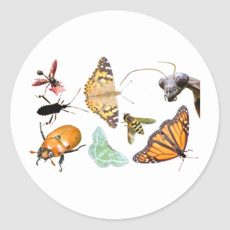 Bug Collage ~ sticker