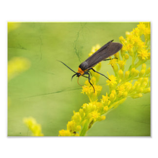Bug Collecting Nectar Photography Print Photographic Print