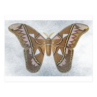 Bug Collection - Moth Postcard