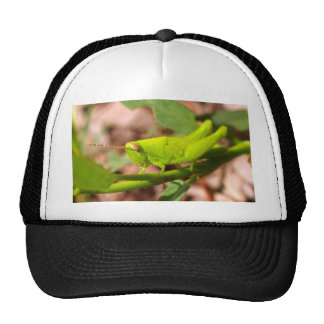bug insect   in  the  nature trucker hat