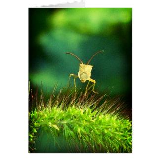 Bug me cards