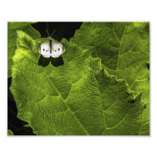Bug on a Leaf Photographic Print