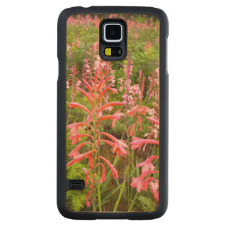 Bugle Lily (Watsonia) Flower, Eastern Cape Carved Maple Galaxy S5 Case