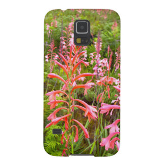 Bugle Lily (Watsonia) Flower, Eastern Cape Galaxy S5 Cover