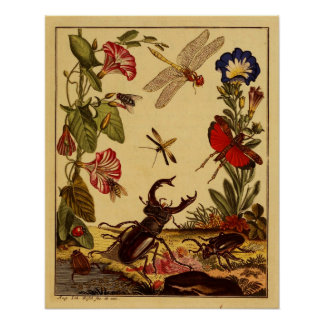 Bugs 1764 poster
