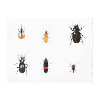 Bugs 2011 canvas print