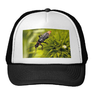 bugs hats