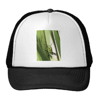 bugs mesh hat
