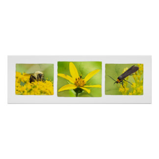 Bugs on Wildflowers Poster Trio Print