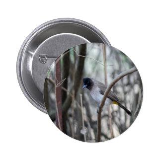 Bulbul  bird posing in the tree 6 cm round badge