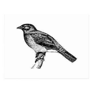 Bulbul Bird Sketch Postcard
