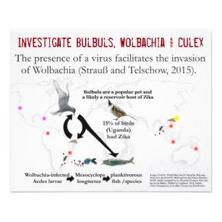 Bulbuls, Wolbachia & Culex (2-Sided) by RoseWrites 11.5 Cm X 14 Cm Flyer